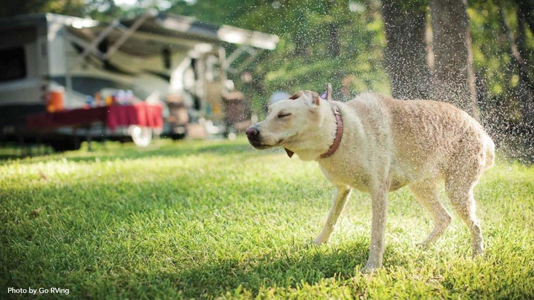 A dog shaking itself dry at the RV Resort